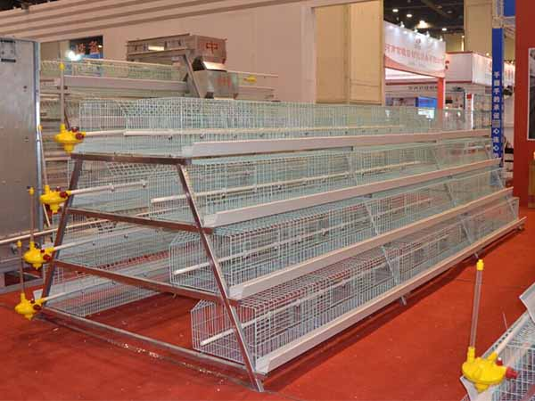 poultry chicken cage for sale