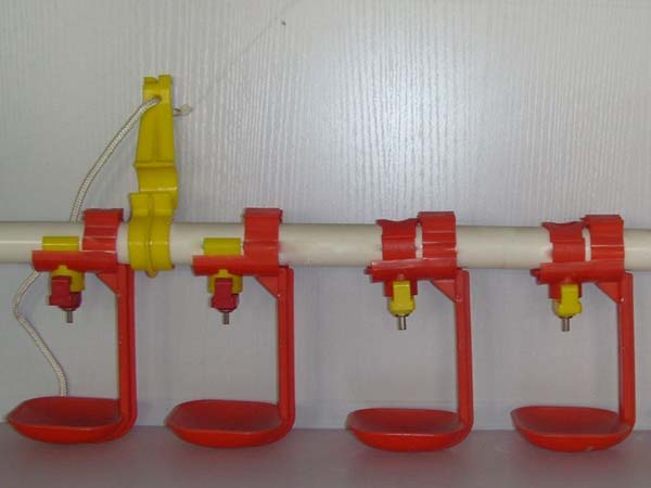 china automatic poultry drinking system