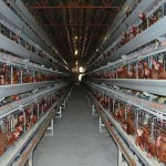 The characteristics of broiler cage