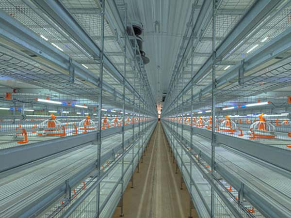broiler cages china