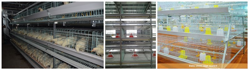 poultry farming cages