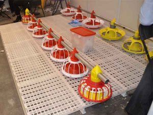 poultry equipment needed in nigeria