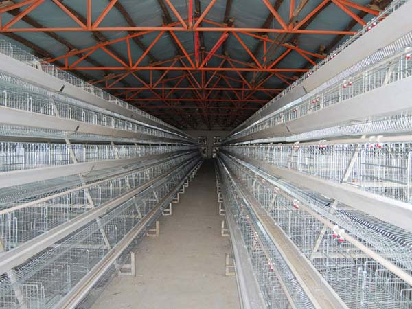 china poultry cages for layer for sale