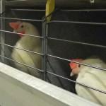 Poultry Equipment Expert – Livi Industry