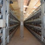 Why poultry farmer Choose Poultry Equipment from Livi Industry