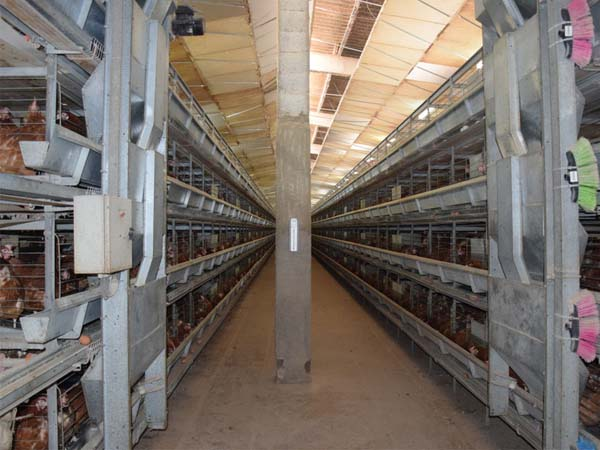 chicken equipment for poultry farmer