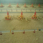 best poultry farming equipment for sale in china