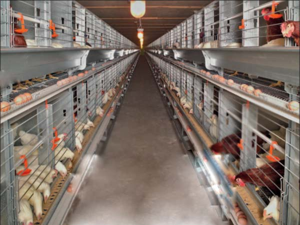Layer Cages for sale - Laying Chicken Cages from Livi