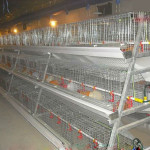 Find Some Top Poultry Equipment Suppliers at Home and Abroad