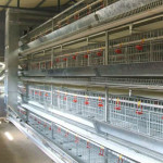 Information About Livi Poultry Farming Equipment in the South Africa Market