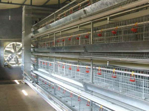 poultry cage manufacturers in South Africa