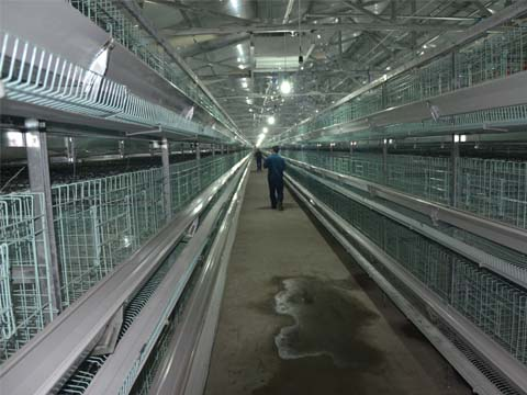 H type laying cage