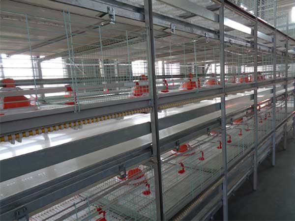broiler chicken cage
