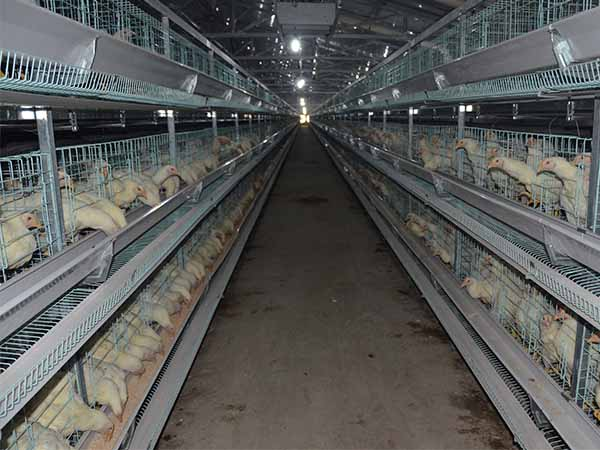 laying poultry cage for sale