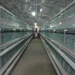 Features and sales of poultry battery chicken cage systems
