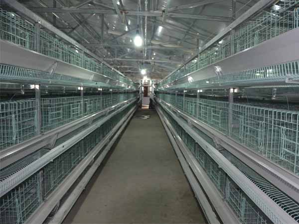 battery chicken cage