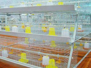 baby chicken cage for sale