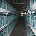 Poultry chicken house equipment characteristics and sales