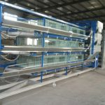 Chicken cage system sales and manufacturing