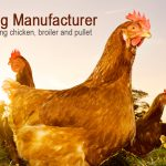 Egg chickens automatic farming equipment