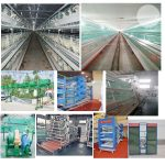 The automatic poultry farming equipment farmer use