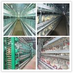 Automated poultry farming equipment for broiler chickens