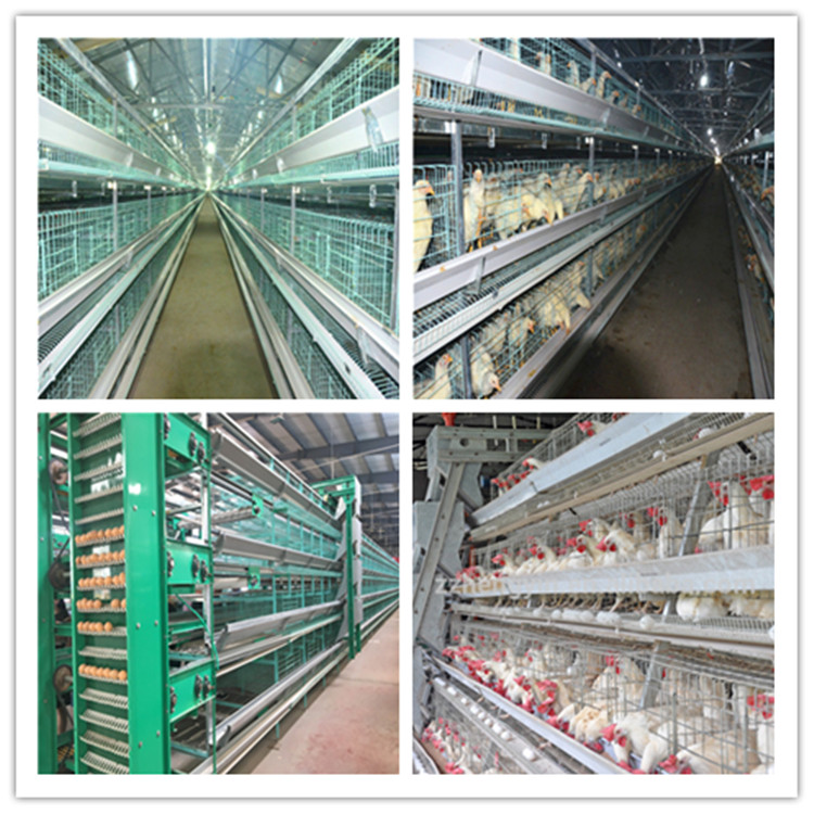 poultry farming equipment manufacture