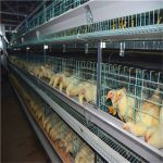 Poultry farming battery frame chicken cage manufacturing supplier