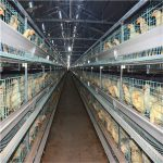 The advantages and characteristics of broiler battery chicken cage system