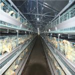 Poultry automatic farming chicken raising equipment sales