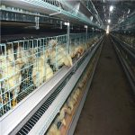Egg chicken laying cages equipment suppliers