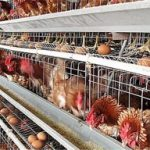 Solutions to some problems in the use of poultry farming equipment