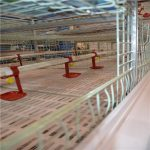 The application of poultry farming layers cage system in poultry farm